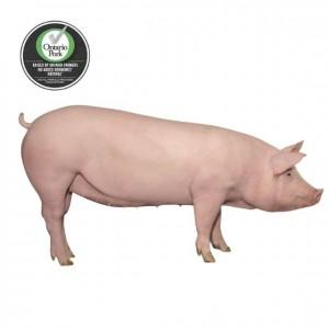 Ontario Pork 安省整猪  150-159lb