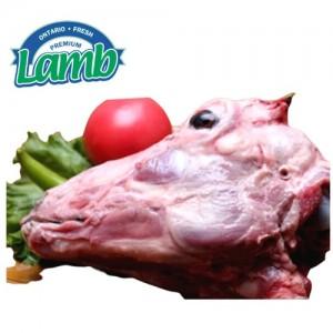 Ontario Lamb羊头